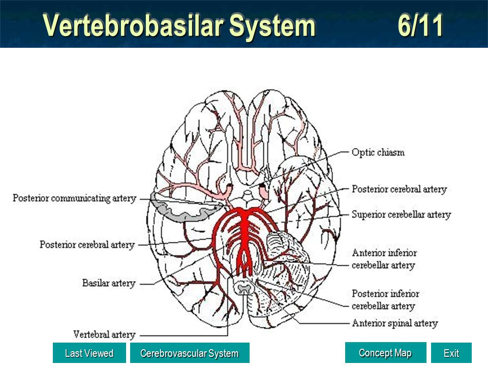 Vertebrobasilar System 5/11 ADAM Vertebral a. Basilar a.
