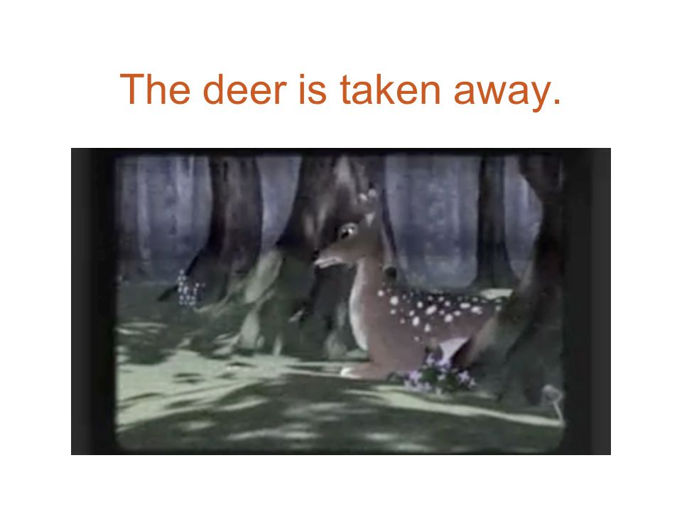 The deer is taken away.