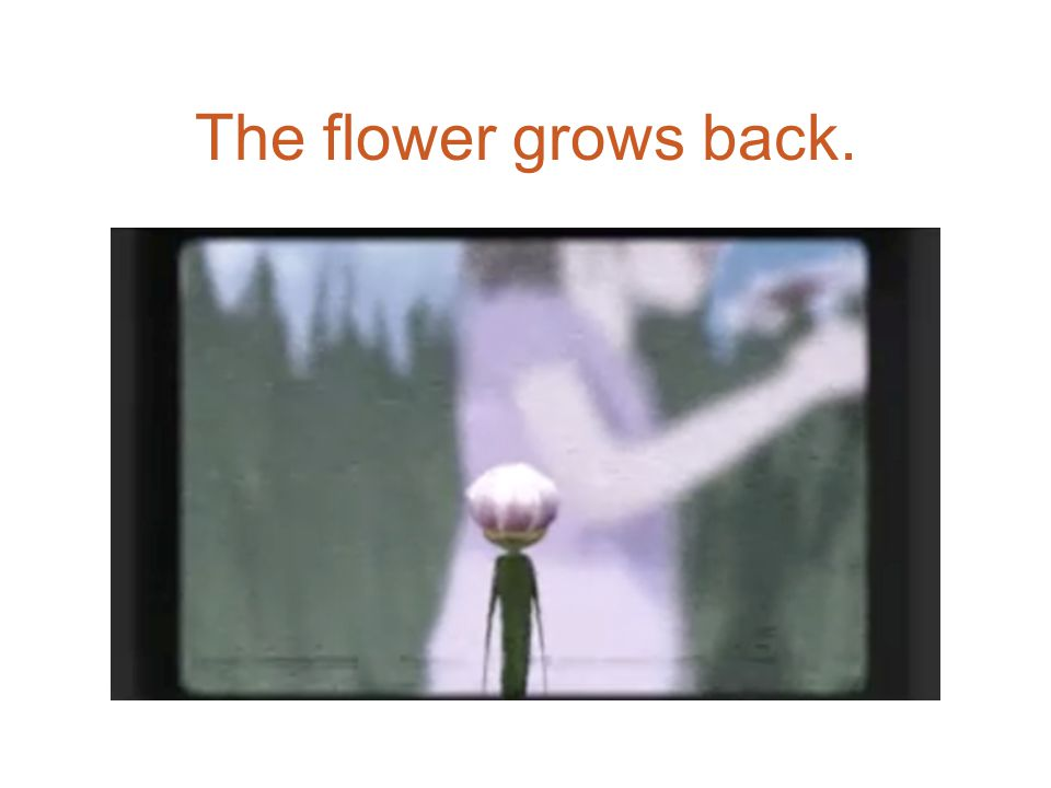 The flower grows back.
