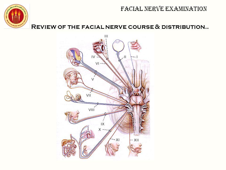 Review of the facial nerve course & distribution.. Facial nerve examination