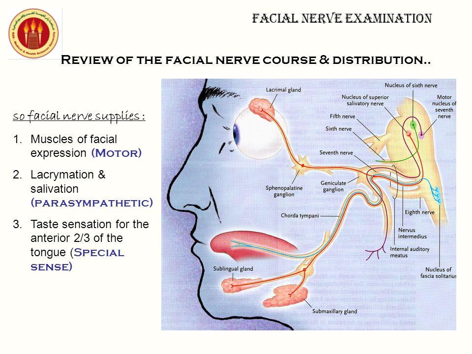 Facial nerve examination Review of the facial nerve course & distribution.. so facial nerve supplies : 1.Muscles of facial expression (Motor) 2.Lacrym