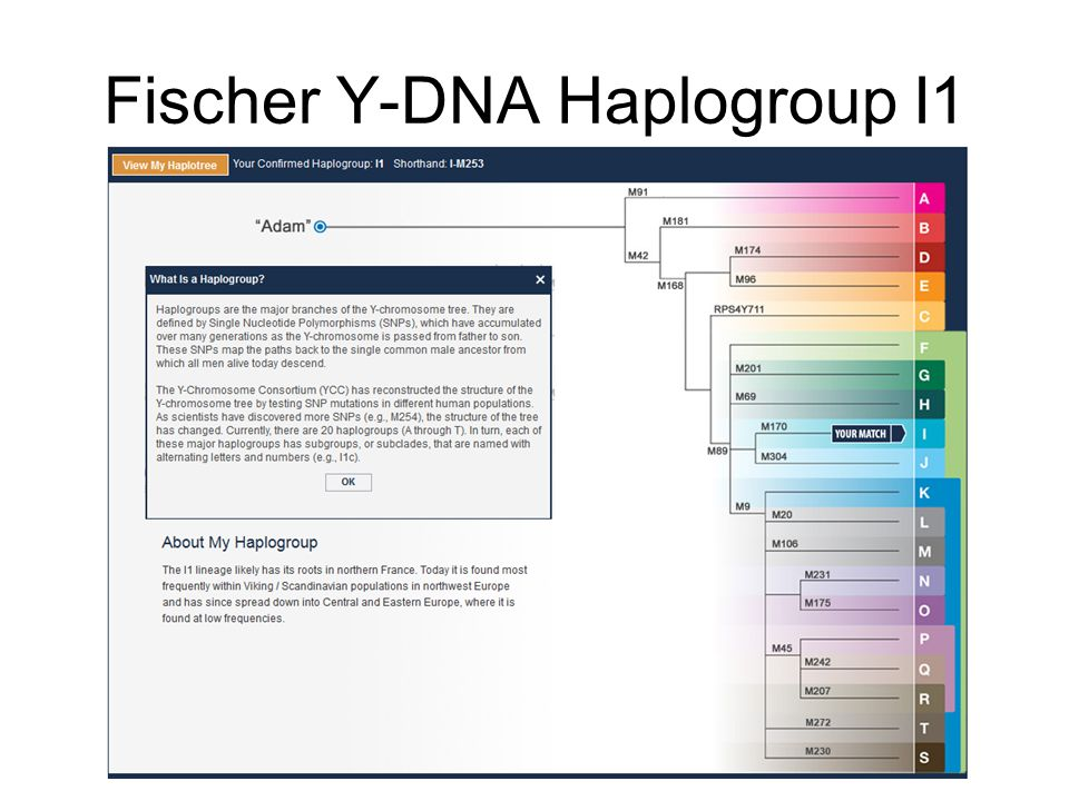 Fischer Y-DNA Haplogroup I1