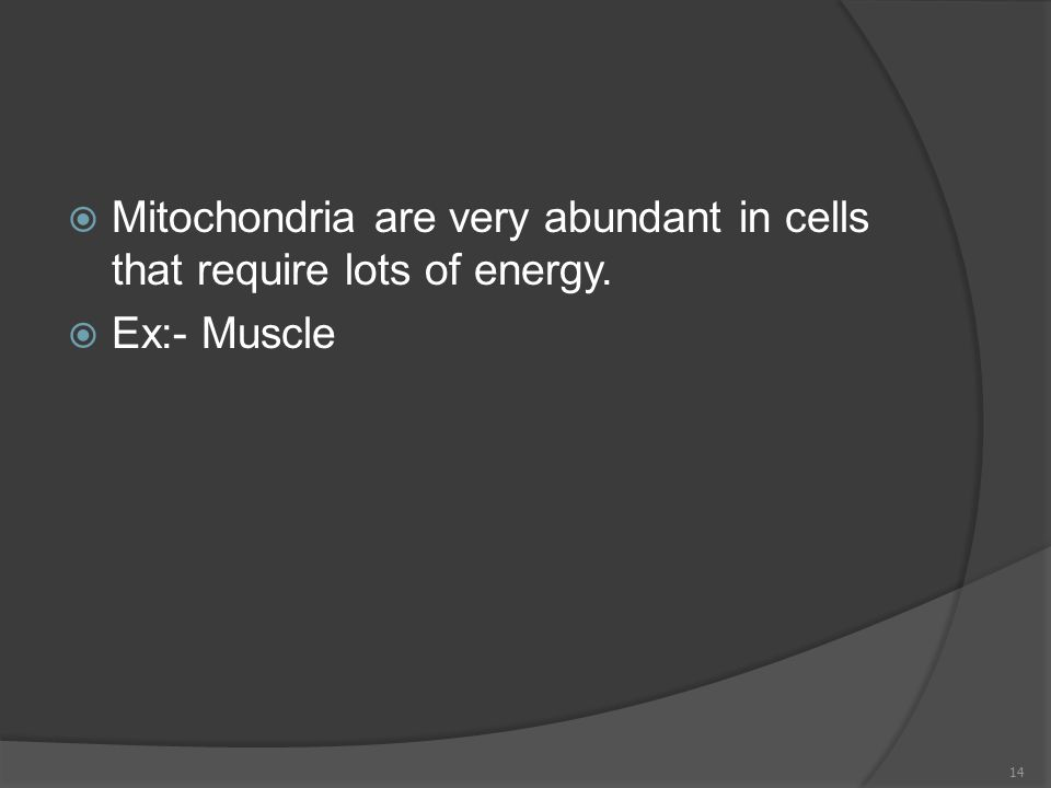  Mitochondria are very abundant in cells that require lots of energy.  Ex:- Muscle 14