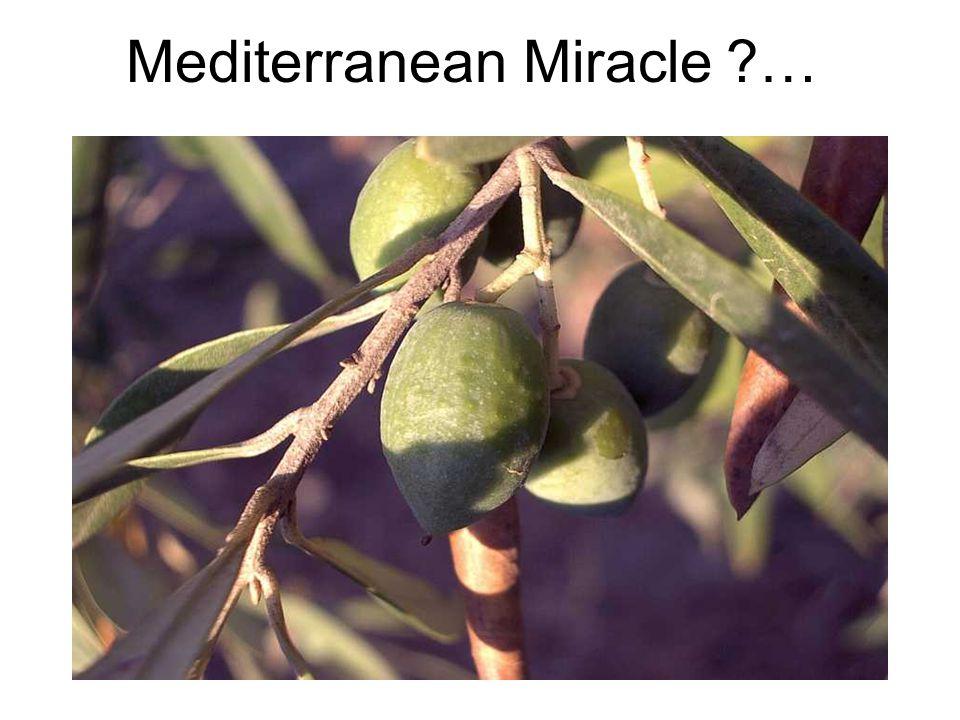 Mediterranean Miracle ?…