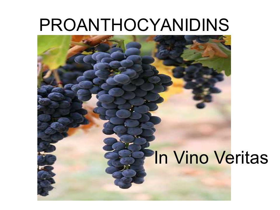 PROANTHOCYANIDINS In Vino Veritas
