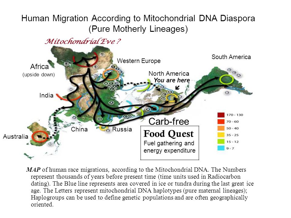 Human Migration According to Mitochondrial DNA Diaspora (Pure Motherly Lineages) MAP of human race migrations, according to the Mitochondrial DNA.