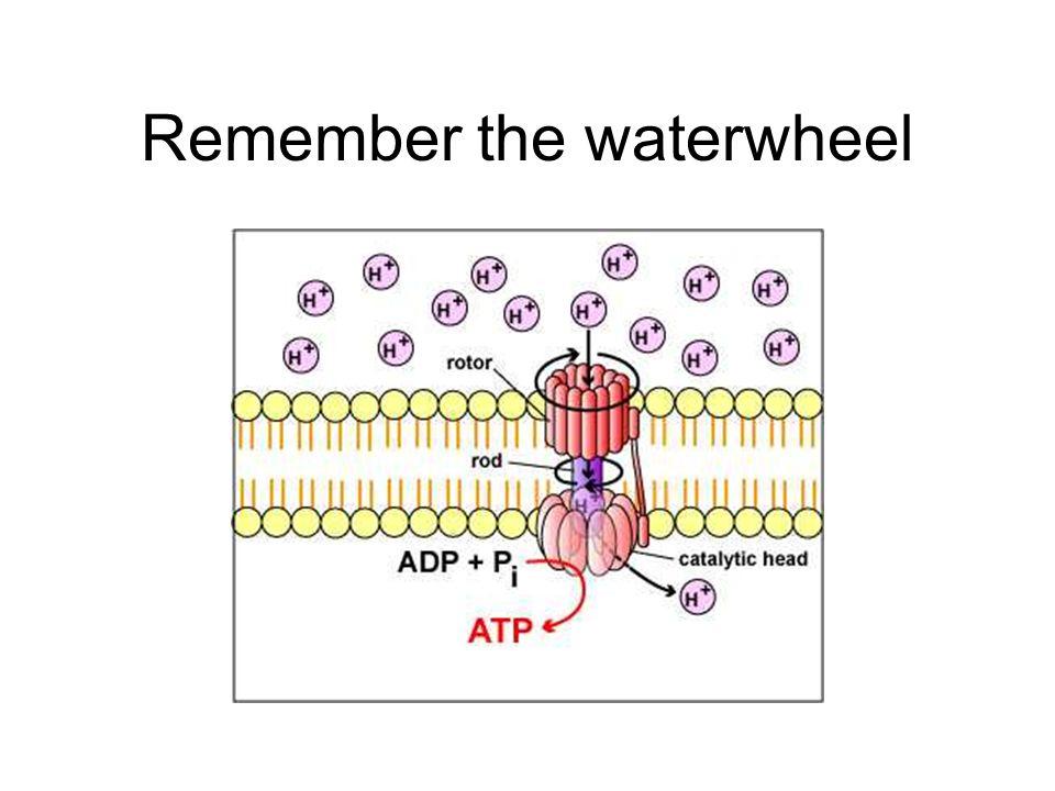 Remember the waterwheel