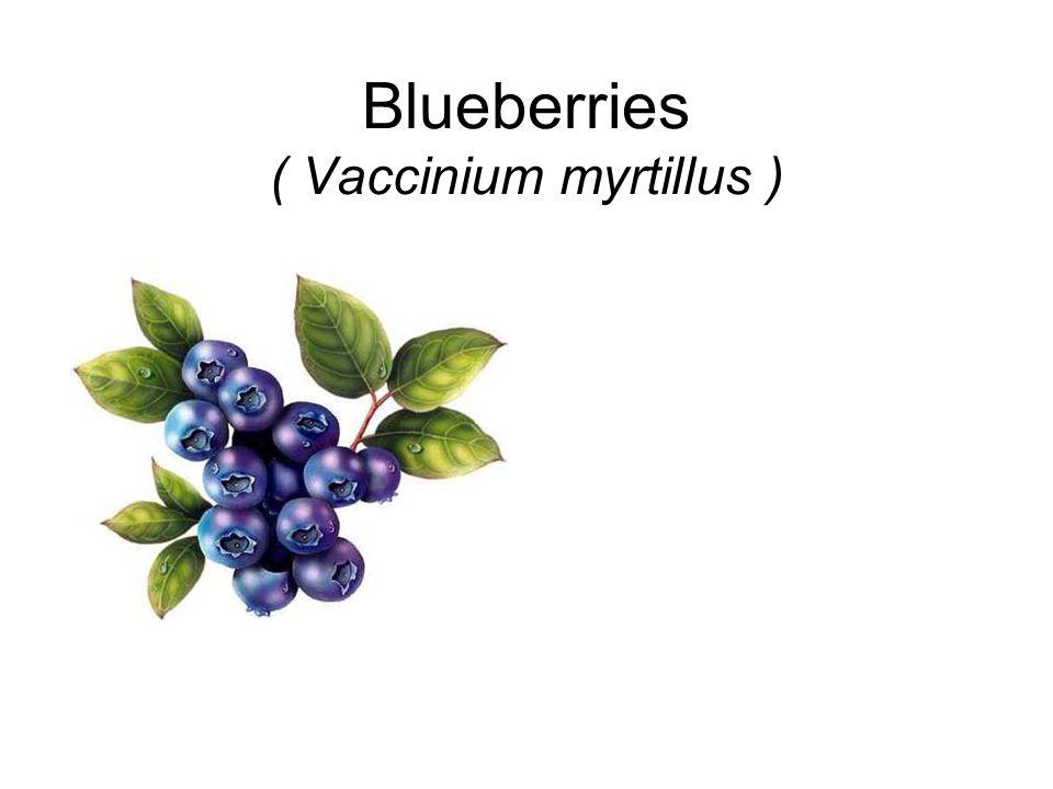 Blueberries ( Vaccinium myrtillus )