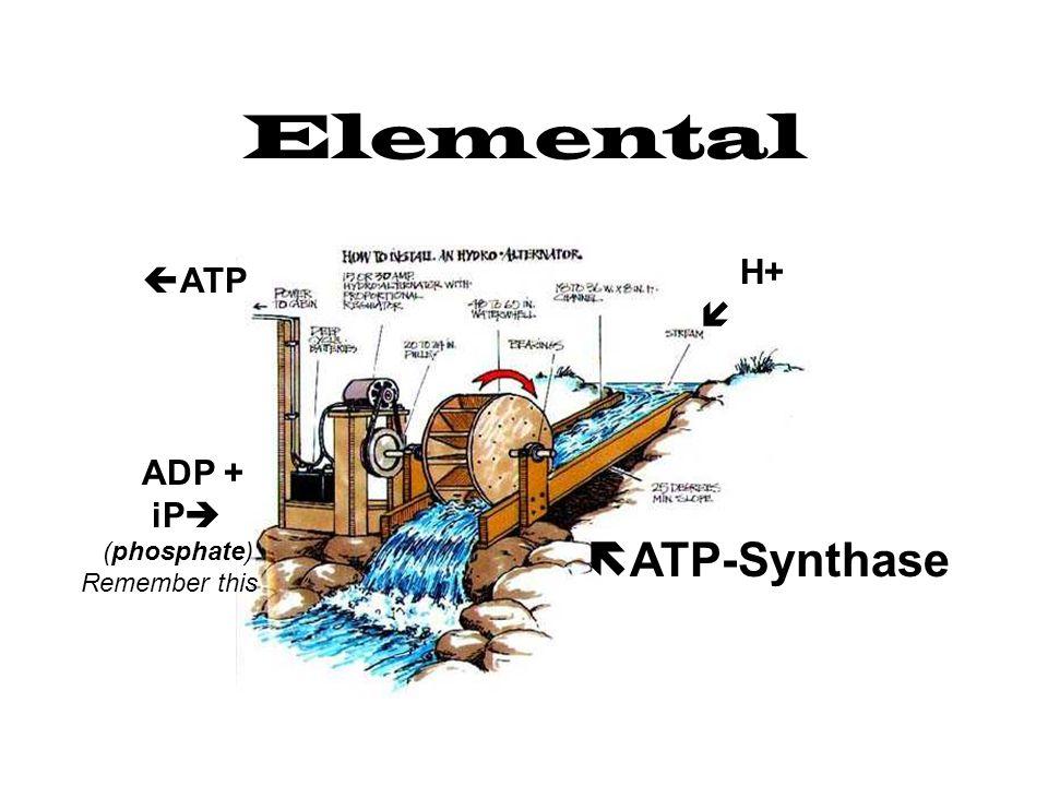 Elemental H+   ATP  ATP-Synthase ADP + iP  (phosphate) Remember this