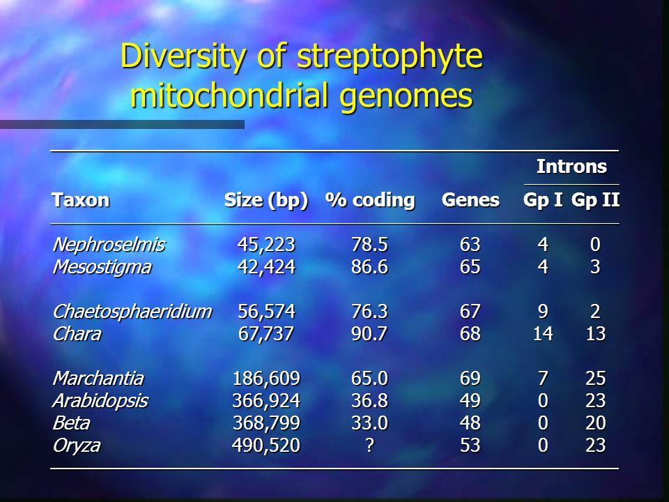 Diversity of streptophyte mitochondrial genomes TaxonNephroselmisMesostigmaChaetosphaeridiumCharaMarchantiaArabidopsisBetaOryza Size (bp) 45,22342,42456,57467,737186,609366,924368,799490,520 % coding 78.586.676.390.765.036.833.0 Genes6365676869494853 Gp I 449147000 Gp II 0321325232023Introns