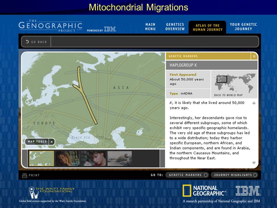 Mitochondrial Migrations