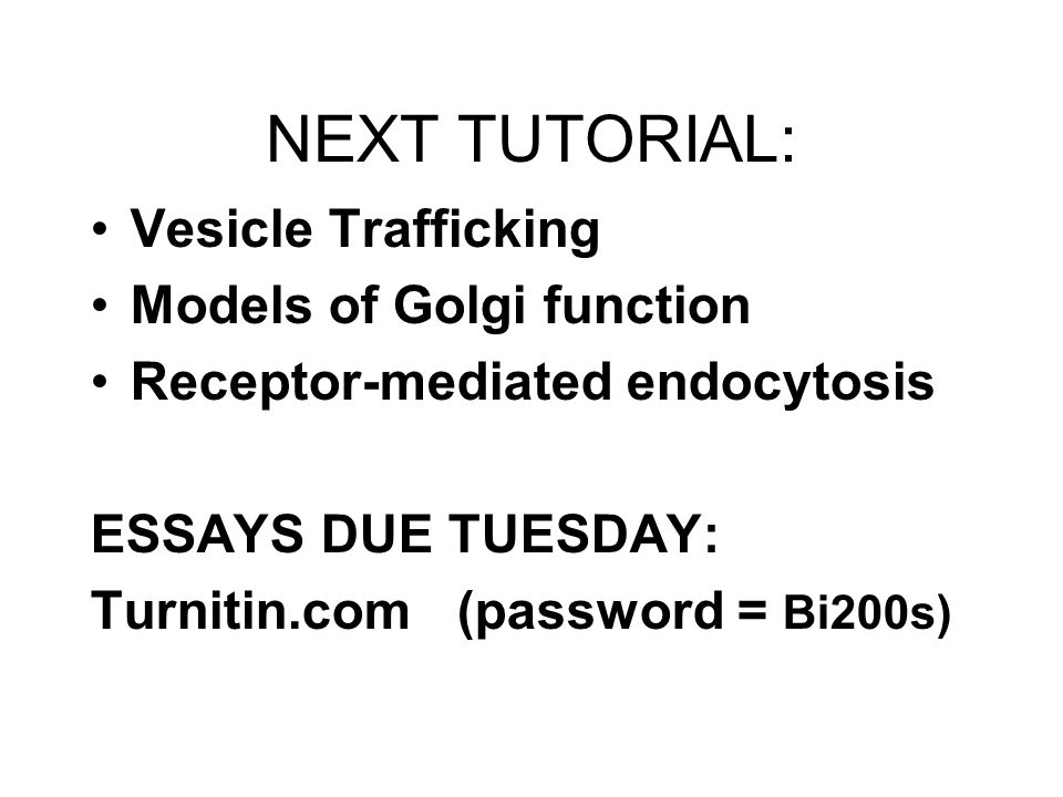 NEXT TUTORIAL: Vesicle Trafficking Models of Golgi function Receptor-mediated endocytosis ESSAYS DUE TUESDAY: Turnitin.com (password = Bi200s)
