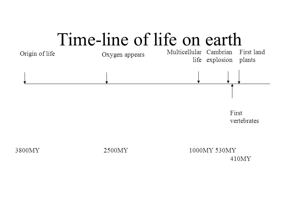 Time-line of life on earth Origin of life 3800MY Multicellular life 1000MY Cambrian explosion 530MY First land plants First vertebrates 2500MY Oxygen appears 410MY
