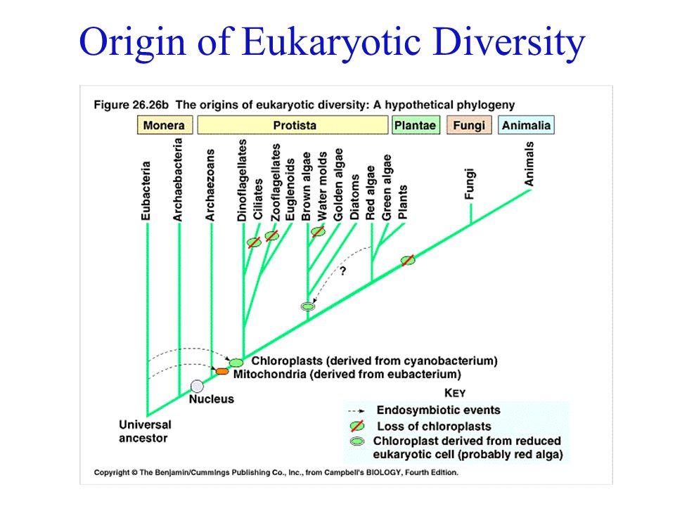 Origin of Eukaryotic Diversity