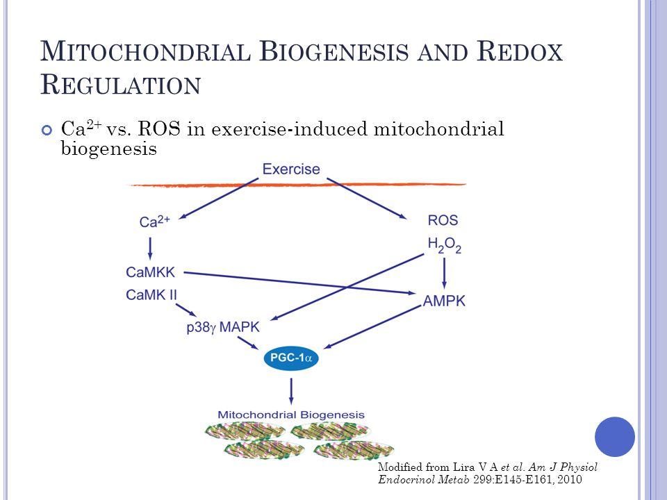 M ITOCHONDRIAL B IOGENESIS AND R EDOX R EGULATION Ca 2+ vs.