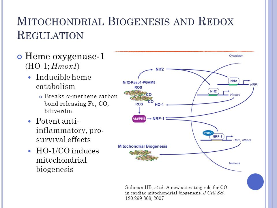 M ITOCHONDRIAL B IOGENESIS AND R EDOX R EGULATION Heme oxygenase-1 (HO-1; Hmox1 ) Inducible heme catabolism Breaks  -methene carbon bond releasing Fe, CO, biliverdin Potent anti- inflammatory, pro- survival effects HO-1/CO induces mitochondrial biogenesis Suliman HB, et al.