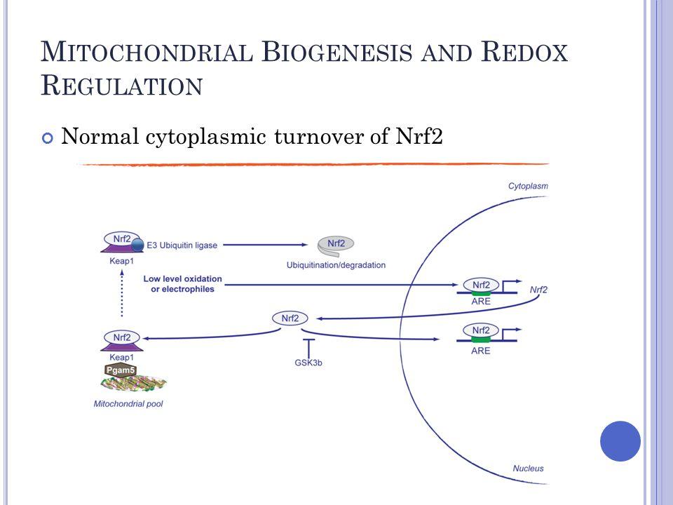 M ITOCHONDRIAL B IOGENESIS AND R EDOX R EGULATION Normal cytoplasmic turnover of Nrf2