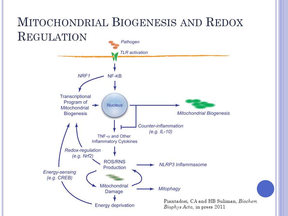 M ITOCHONDRIAL B IOGENESIS AND R EDOX R EGULATION Piantadosi, CA and HB Suliman, Biochem Biophys Acta, in press 2011