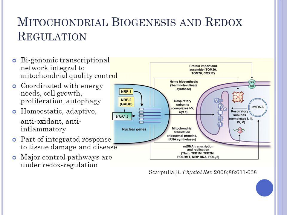 M ITOCHONDRIAL B IOGENESIS AND R EDOX R EGULATION Scarpulla,R.