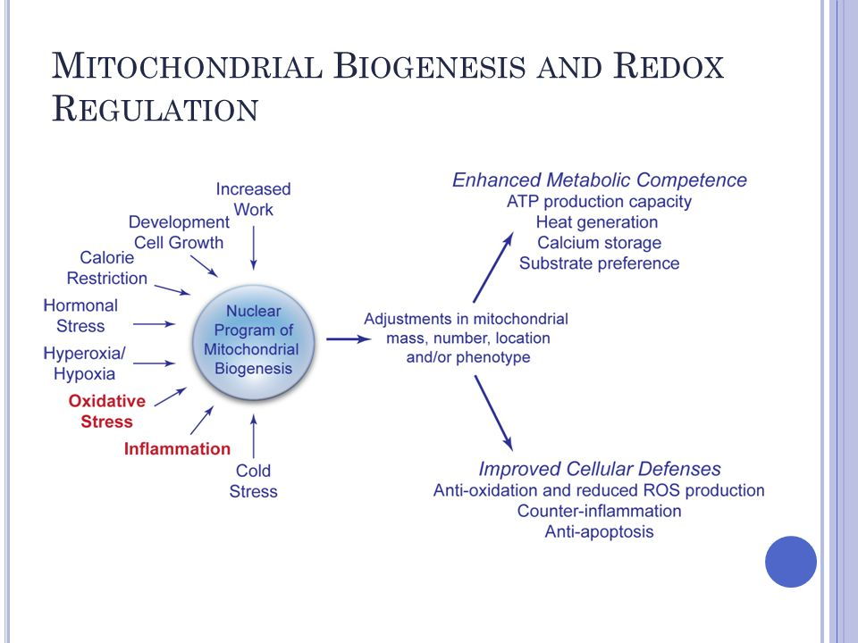 M ITOCHONDRIAL B IOGENESIS AND R EDOX R EGULATION HO-1/CO induction of mitochondrial biogenesis Control MLE cells HO-1 transfection 24h MLE cells +CO-RM HO-1 silencing +CO-RM Green, Mitotracker; Red, NRF-1; Blue, Dapi