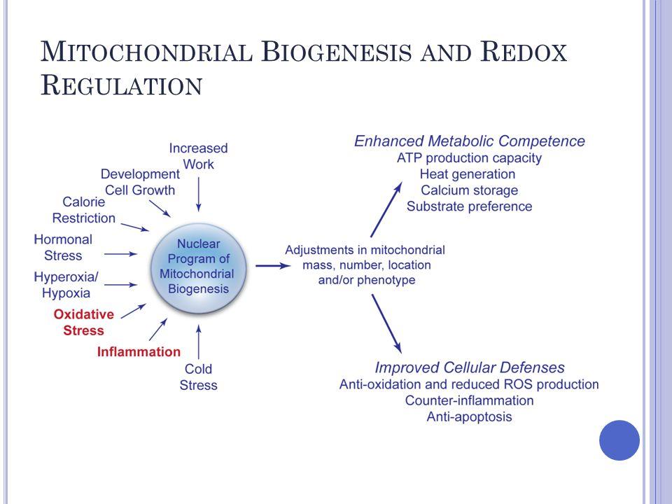 M ITOCHONDRIAL B IOGENESIS AND R EDOX R EGULATION