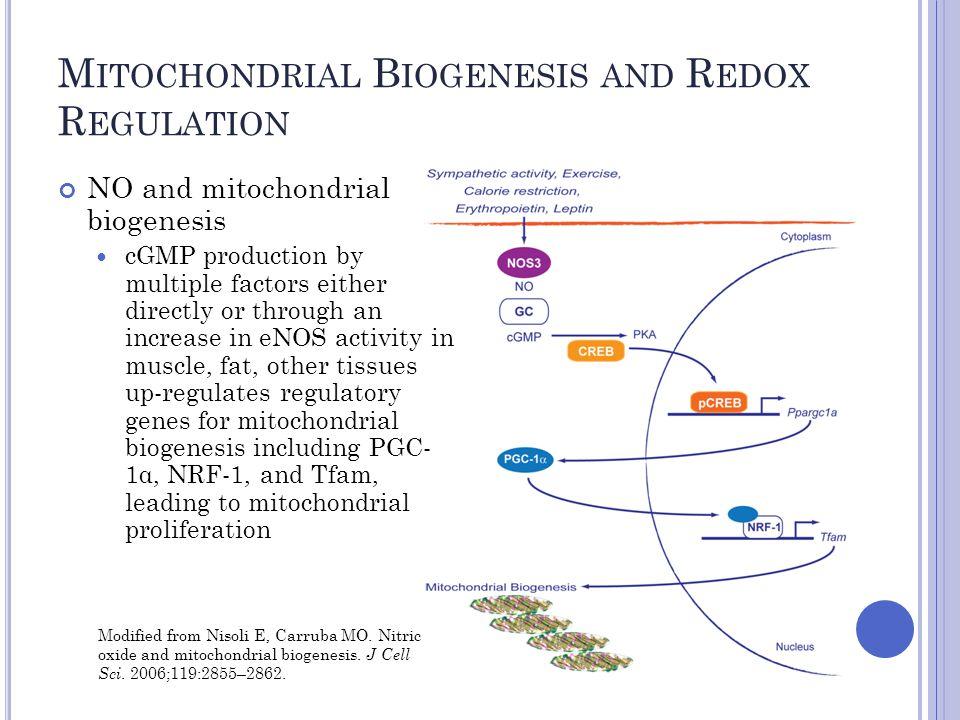 M ITOCHONDRIAL B IOGENESIS AND R EDOX R EGULATION Piantadosi CA, et al.