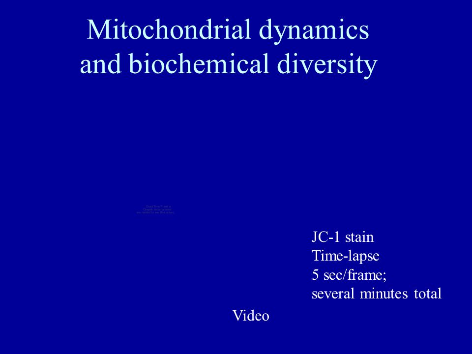 Mitochondrial dynamics and biochemical diversity JC-1 stain Time-lapse 5 sec/frame; several minutes total Video