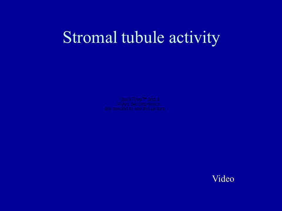 Stromal tubule activity Video