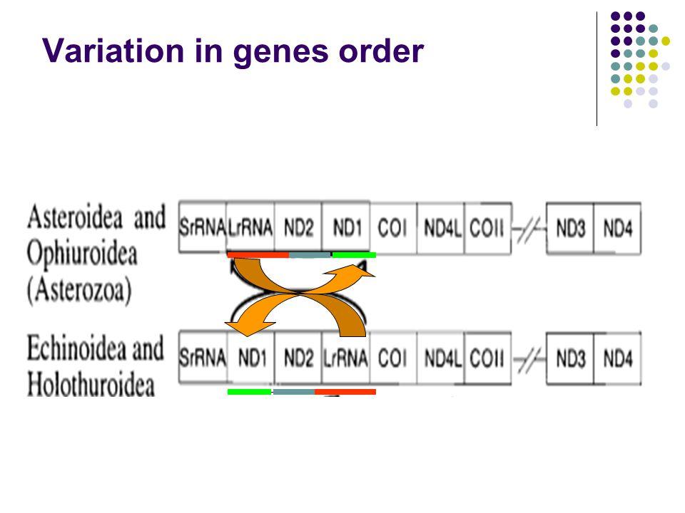Variation in genes order