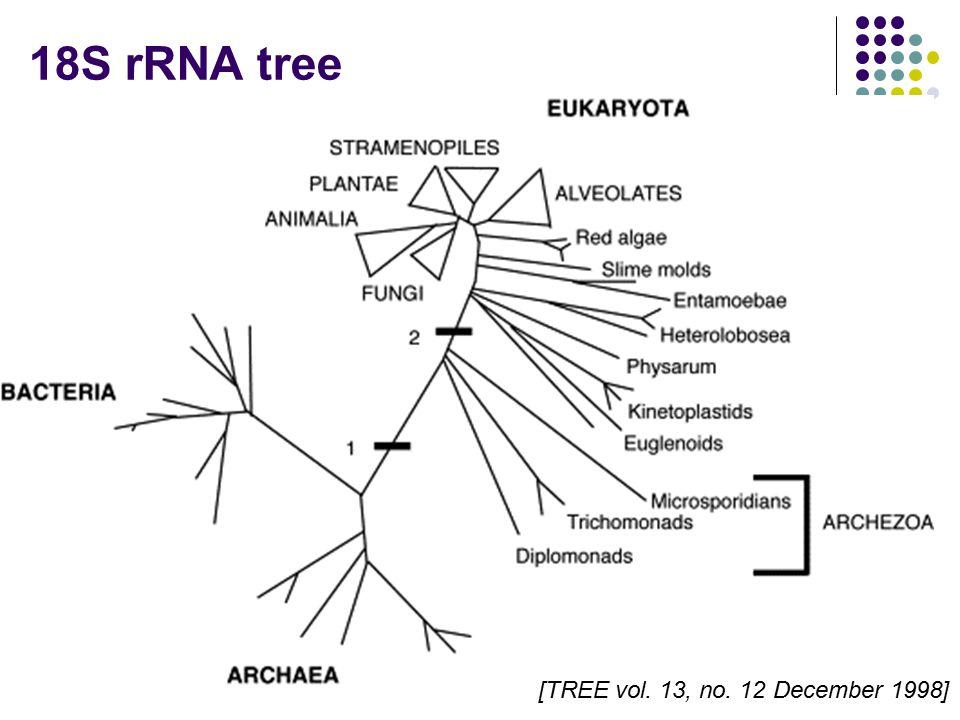 18S rRNA tree [TREE vol. 13, no. 12 December 1998]