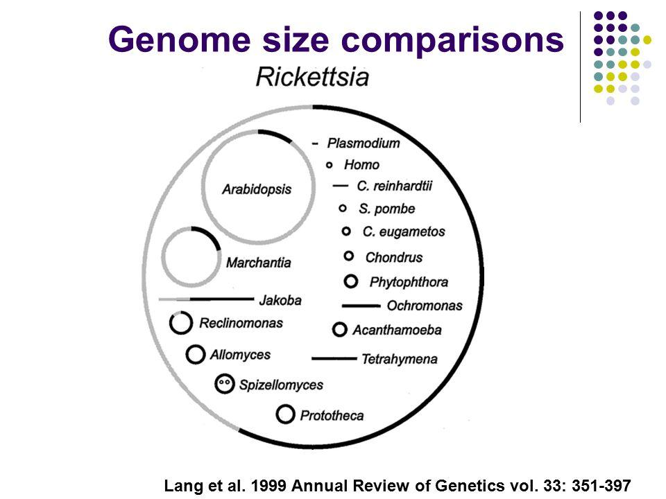Lang et al. 1999 Annual Review of Genetics vol. 33: 351-397 Genome size comparisons