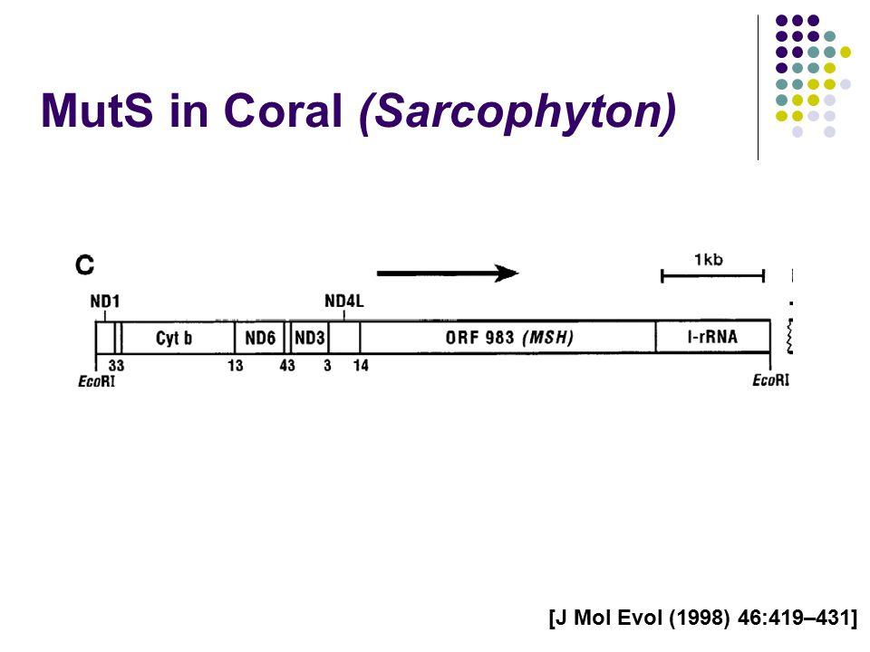 MutS in Coral (Sarcophyton) [J Mol Evol (1998) 46:419–431]