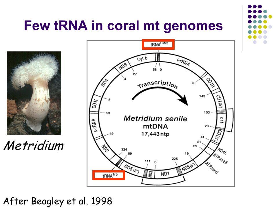Few tRNA in coral mt genomes Metridium After Beagley et al. 1998