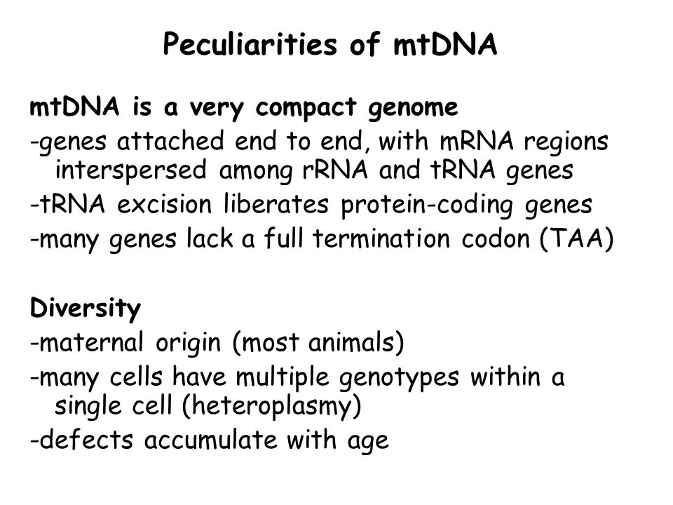 Peculiarities of mtDNA mtDNA is a very compact genome -genes attached end to end, with mRNA regions interspersed among rRNA and tRNA genes -tRNA excis