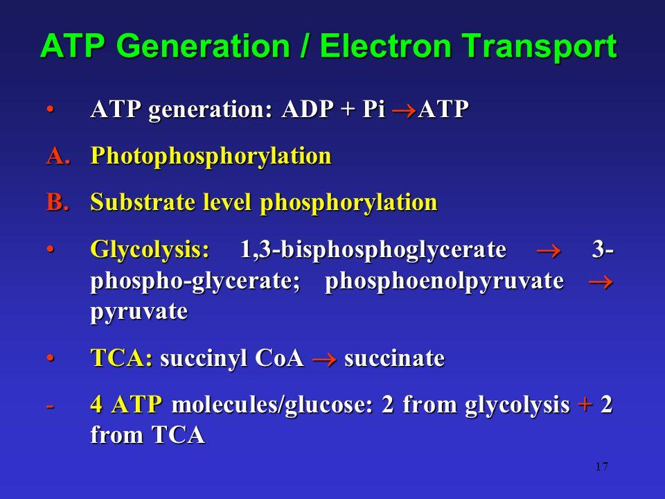 17 ATP Generation / Electron Transport ATP generation: ADP + Pi  ATPATP generation: ADP + Pi  ATP A.Photophosphorylation B.Substrate level phosphory