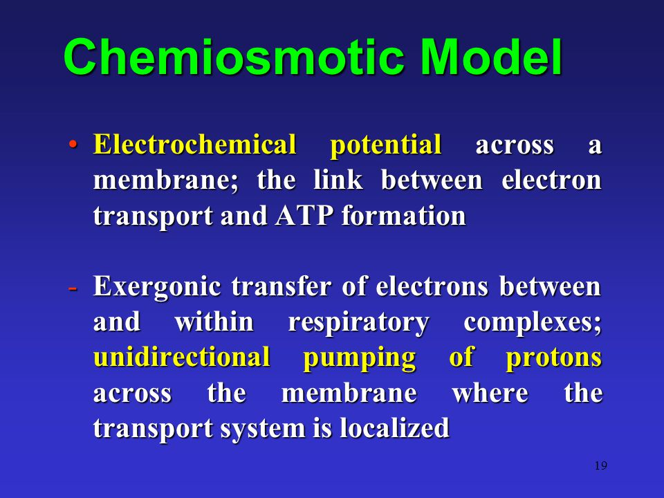 19 Chemiosmotic Model Electrochemical potential across a membrane; the link between electron transport and ATP formationElectrochemical potential acro