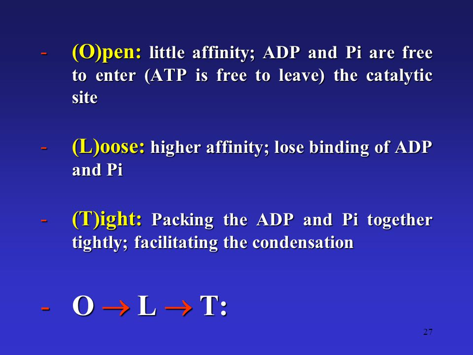 27 -(O)pen: little affinity; ADP and Pi are free to enter (ATP is free to leave) the catalytic site -(L)oose: higher affinity; lose binding of ADP and