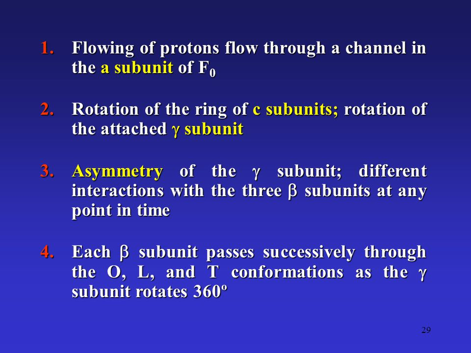 29 1.Flowing of protons flow through a channel in the a subunit of F 0 2.Rotation of the ring of c subunits; rotation of the attached  subunit 3.Asym