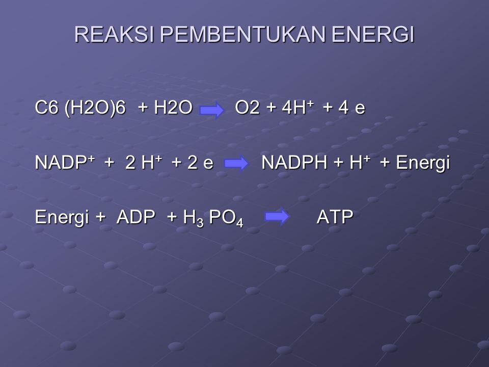 REAKSI PEMBENTUKAN ENERGI C6 (H2O)6 + H2O O2 + 4H + + 4 e C6 (H2O)6 + H2O O2 + 4H + + 4 e NADP + + 2 H + + 2 e NADPH + H + + Energi NADP + + 2 H + + 2 e NADPH + H + + Energi Energi + ADP + H 3 PO 4 ATP Energi + ADP + H 3 PO 4 ATP