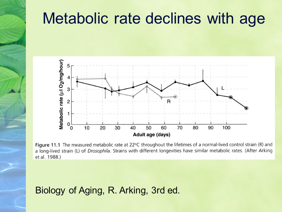 Metabolic rate declines with age Biology of Aging, R. Arking, 3rd ed.