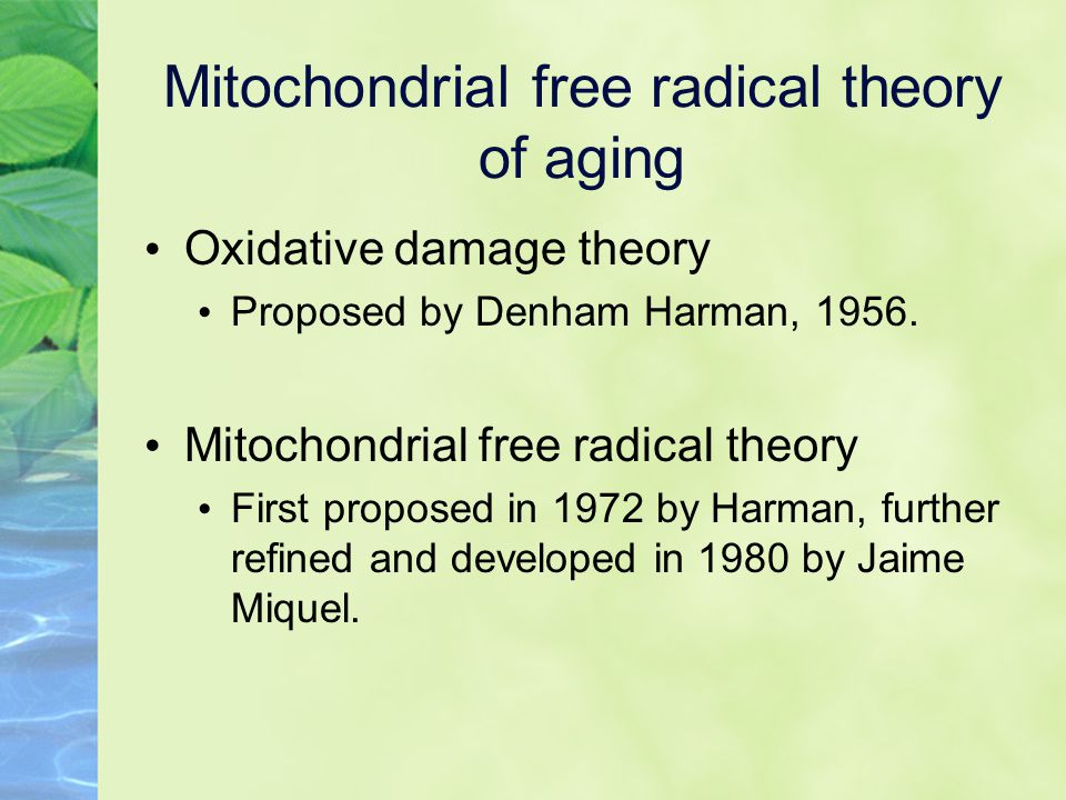 Mitochondrial free radical theory of aging Oxidative damage theory Proposed by Denham Harman, 1956.
