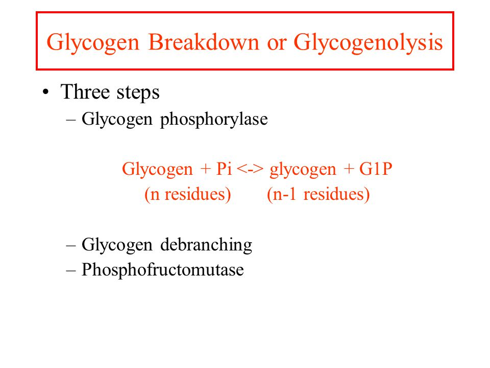 Glycogen Storage Glycogen is a D-glucose polymer  (1  4) linkages  (1  6) linked branches every 8-14 residues