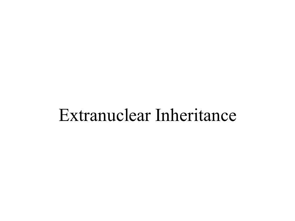 Extranuclear Inheritance
