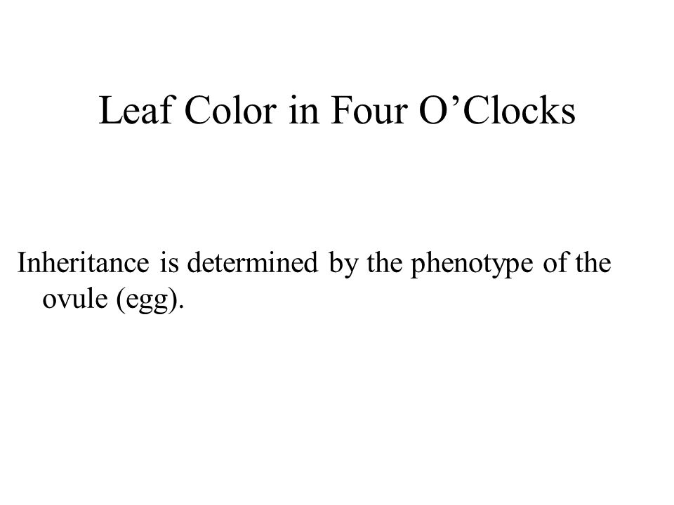Leaf Color in Four O'Clocks Inheritance is determined by the phenotype of the ovule (egg).