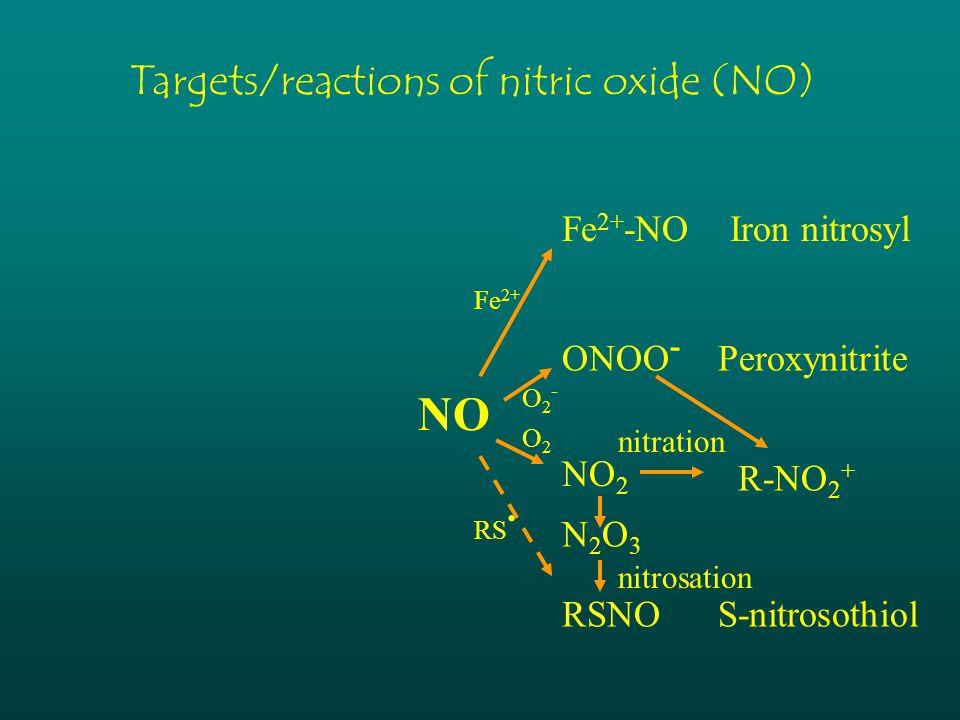 NO Fe 2+ -NO Iron nitrosyl ONOO - Peroxynitrite NO 2 RSNO S-nitrosothiol Fe 2+ O2-O2- O2O2 RS. Targets/reactions of nitric oxide (NO) N2O3N2O3 nitrati