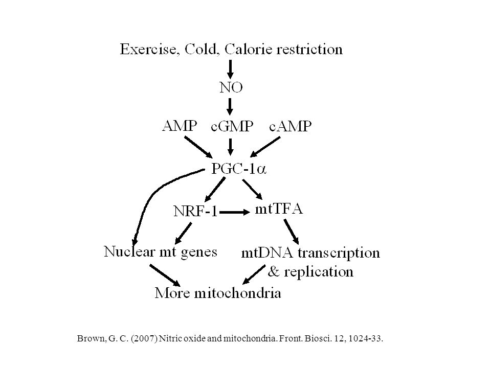 Brown, G. C. (2007) Nitric oxide and mitochondria. Front. Biosci. 12, 1024-33.
