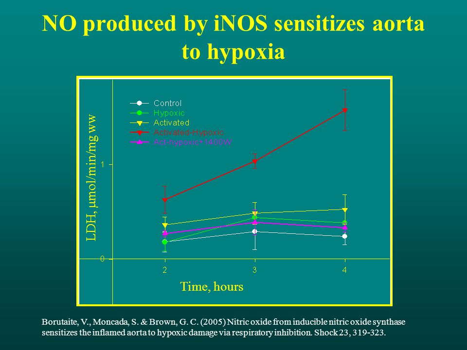 NO produced by iNOS sensitizes aorta to hypoxia Time, hours LDH,  mol/min/mg ww Borutaite, V., Moncada, S.