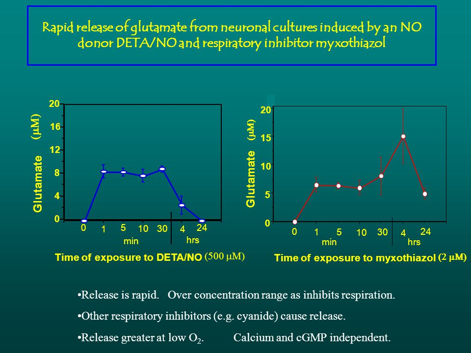 Rapid release of glutamate from neuronal cultures induced by an NO donor DETA/NO and respiratory inhibitor myxothiazol 0 4 8 12 16 20 Glutamate 1 5 1030 4 240 min hrs Time of exposure to DETA/NO   0 5 10 15 20 Glutamate 0 15 10 30 4 24 minhrs Time of exposure to myxothiazol   Release is rapid.