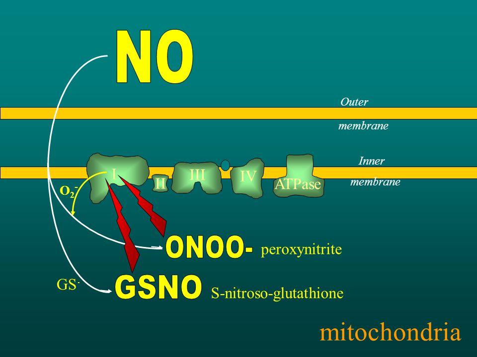 I II III IV ATPase Outer membrane Inner membrane mitochondria O2-O2- peroxynitrite GS.