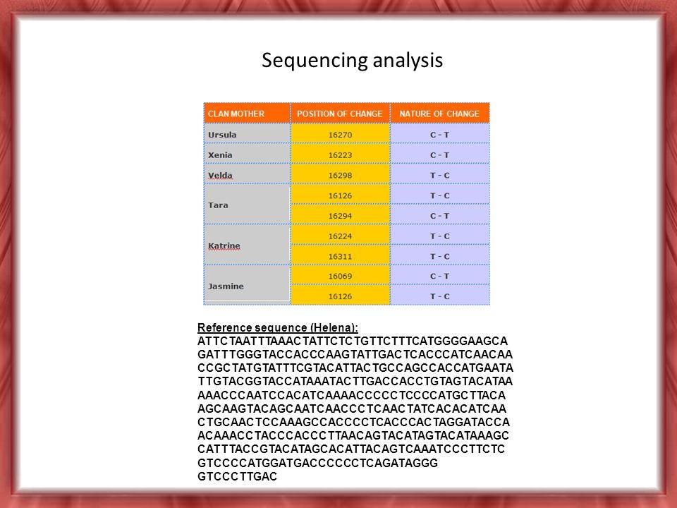 Reference sequence (Helena): ATTCTAATTTAAACTATTCTCTGTTCTTTCATGGGGAAGCA GATTTGGGTACCACCCAAGTATTGACTCACCCATCAACAA CCGCTATGTATTTCGTACATTACTGCCAGCCACCATGAATA TTGTACGGTACCATAAATACTTGACCACCTGTAGTACATAA AAACCCAATCCACATCAAAACCCCCTCCCCATGCTTACA AGCAAGTACAGCAATCAACCCTCAACTATCACACATCAA CTGCAACTCCAAAGCCACCCCTCACCCACTAGGATACCA ACAAACCTACCCACCCTTAACAGTACATAGTACATAAAGC CATTTACCGTACATAGCACATTACAGTCAAATCCCTTCTC GTCCCCATGGATGACCCCCCTCAGATAGGG GTCCCTTGAC Sequencing analysis